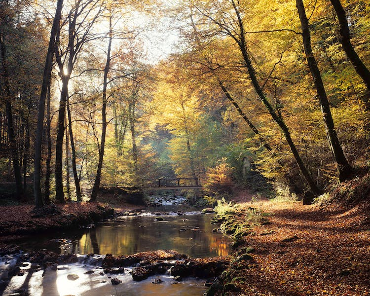 Autumn in the woods - Hotel Brimer Sights and activities Mullerthal