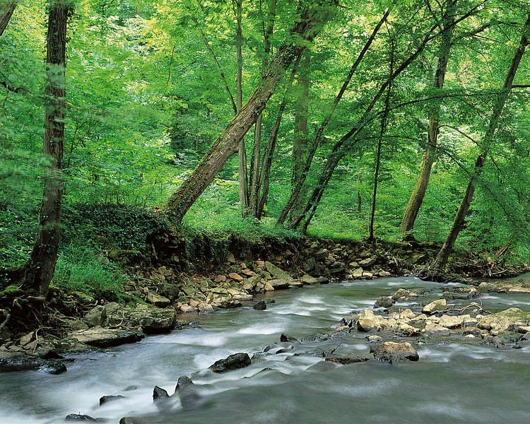 Wild river in the woods - Hotel Brimer Sights and activities Mullerthal