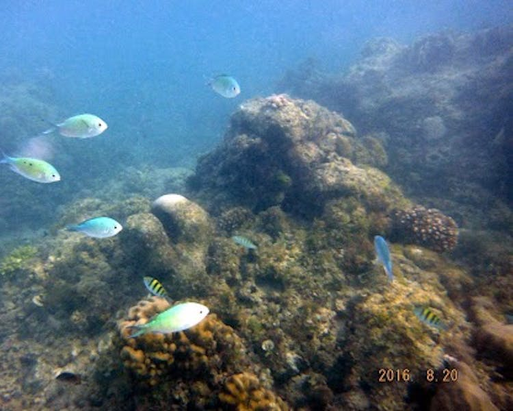 Underwater activities if you go Diving at Bohol Sea Resort