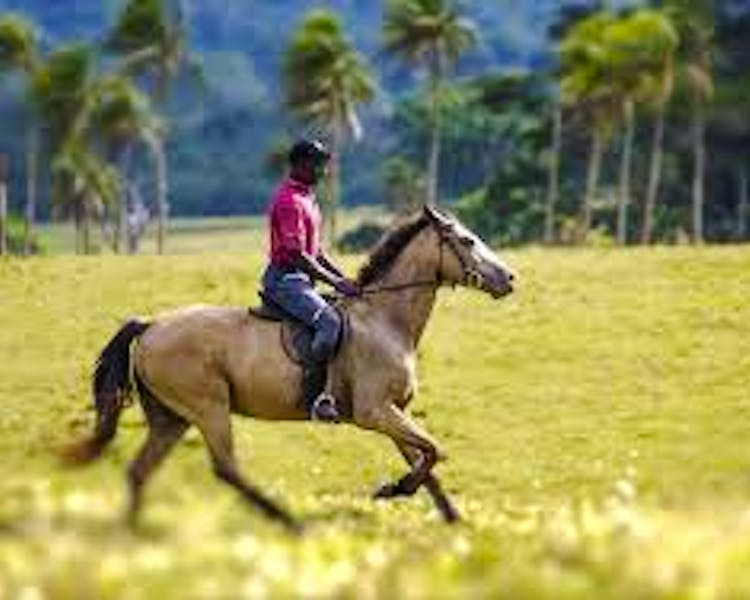 Things to do The Havannah, Vanuatu luxury resort for couples horseriding