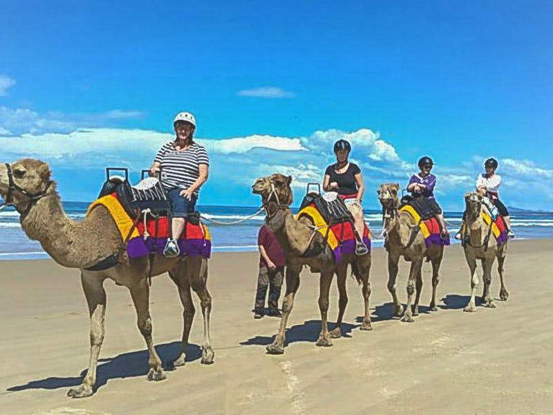 Ocean Park Motel - Coffs Coast Camels