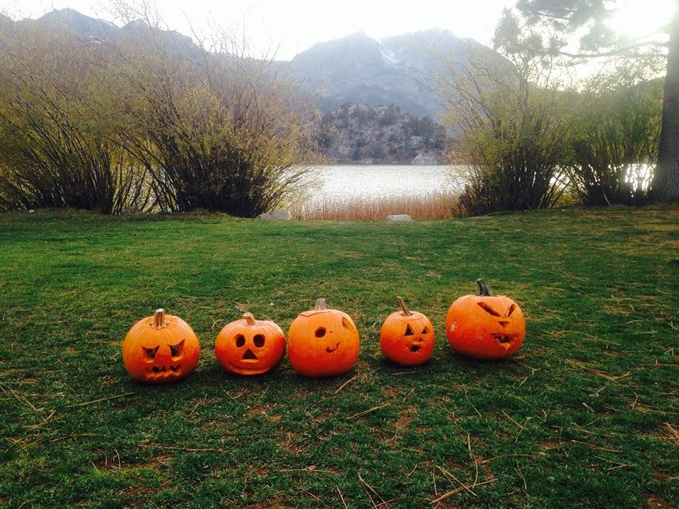 June Lake Pumpkin  patch, 10/6/17