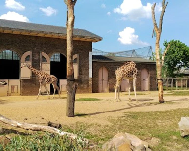 Home wedgewood hotel for Garden room london zoo