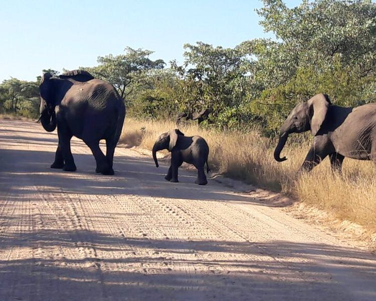 Elephant herd crossing the road on safari