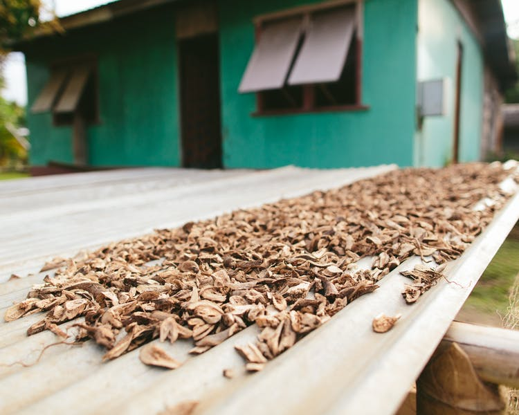 Kava drying on the weekly village tour - The Remote Resort Fiji Islands