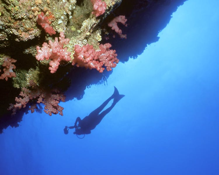 Dive - The Remote Resort Fiji Islands