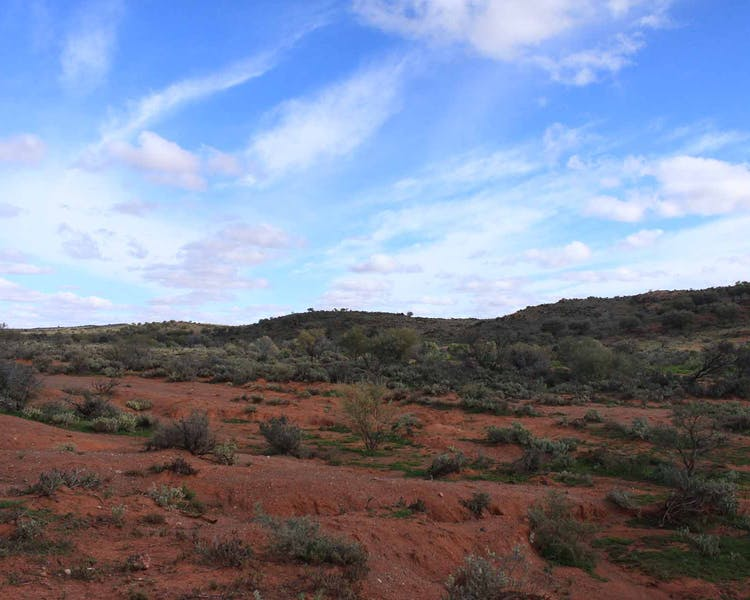 Outback Landscape to die for. Broken Hill red dirt