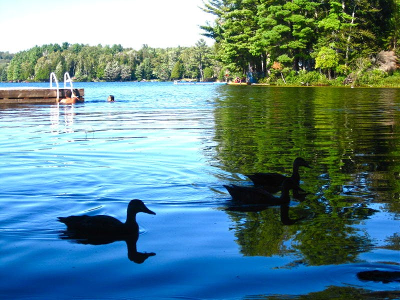Listen to the loons and the tranquil quiet on Walker Lake near Huntsville and Algonquin Park