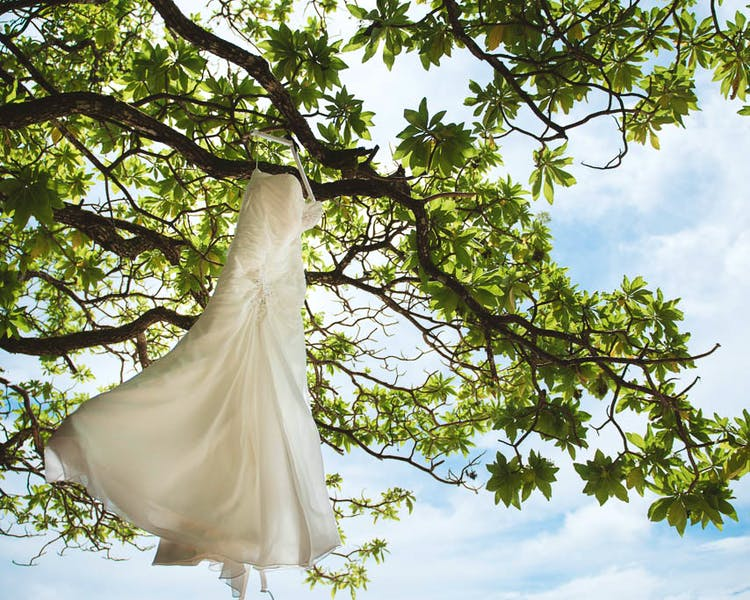 Wedding dress in tropical tree