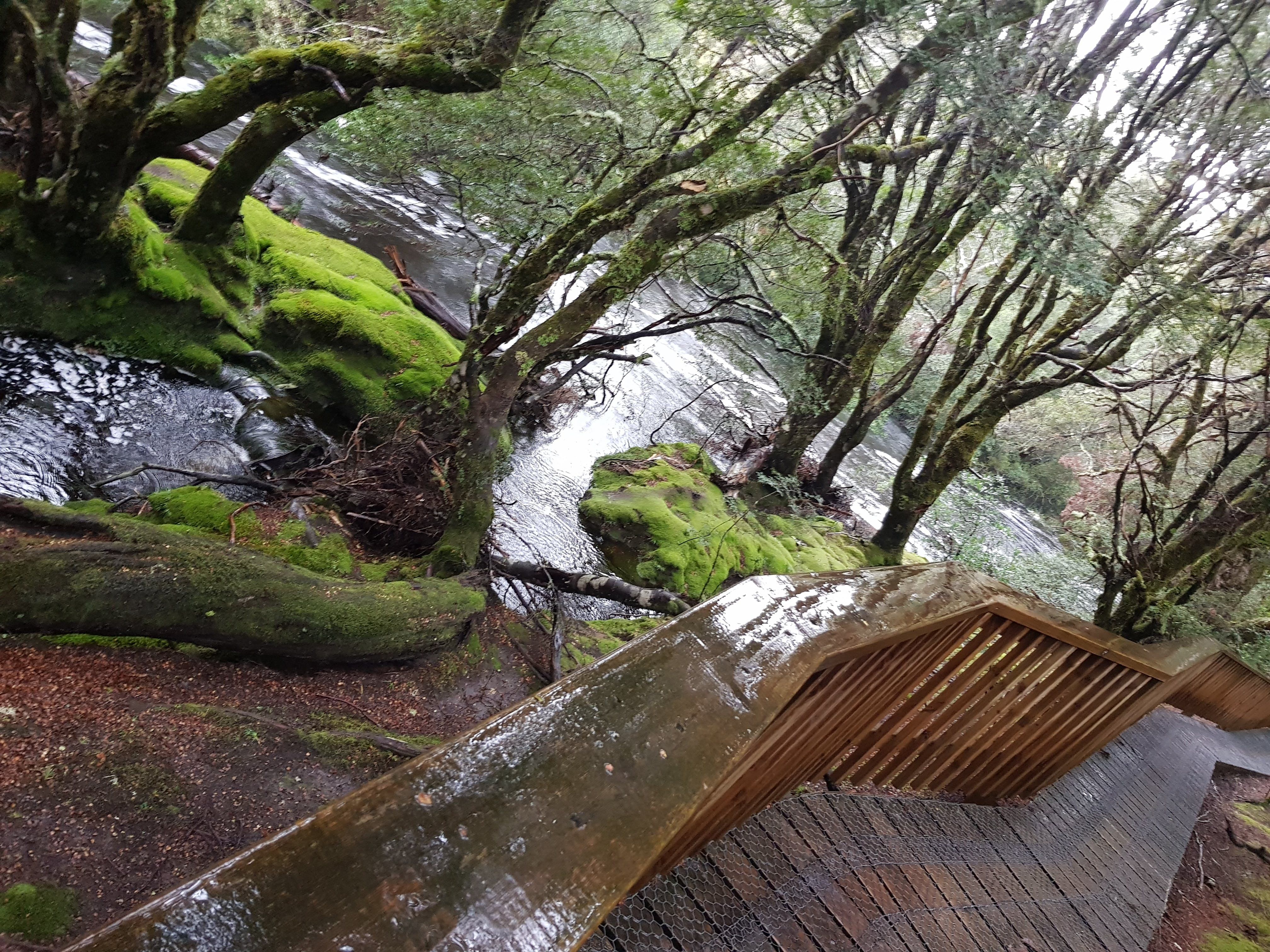 Cradle Mountain Walking Track