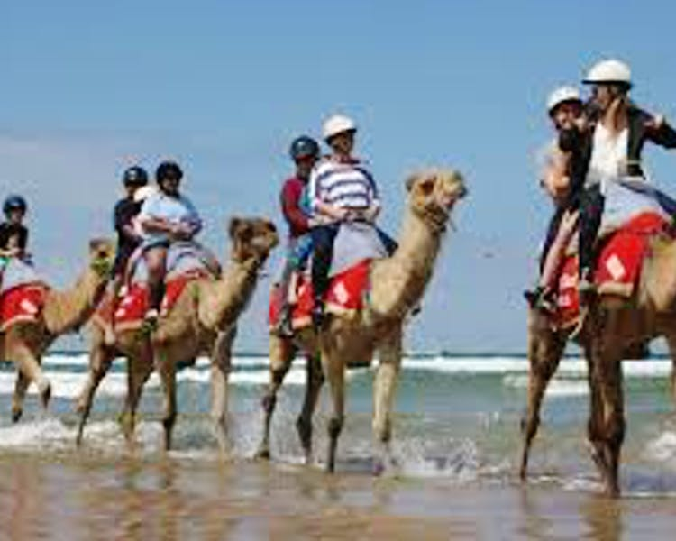 Camel Rides at the Jetty