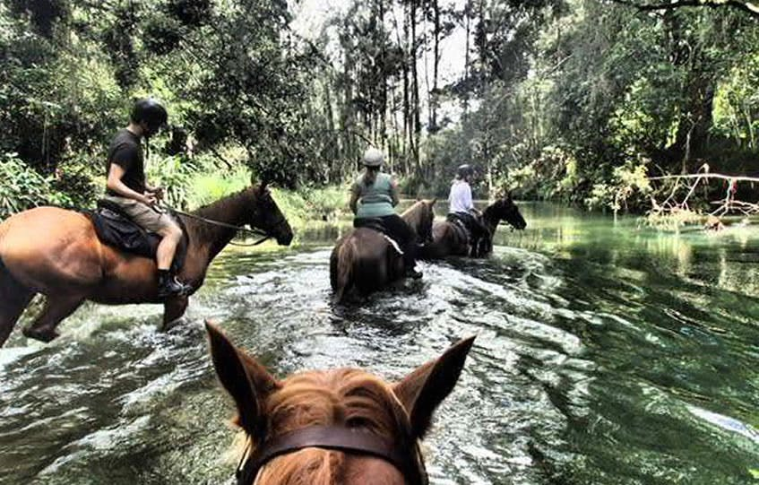 HWH Stables - Riding School & Trail Rides