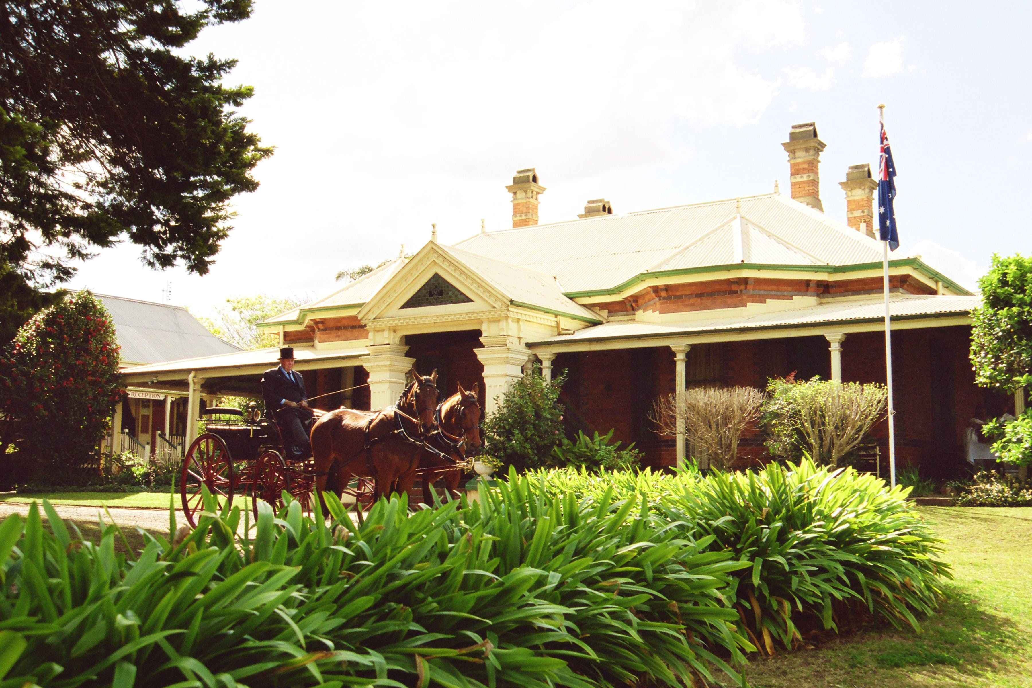 A pair of Cleveland Bays out the front of Vacy Hall Toowoomba's Grand Boutique Hotel
