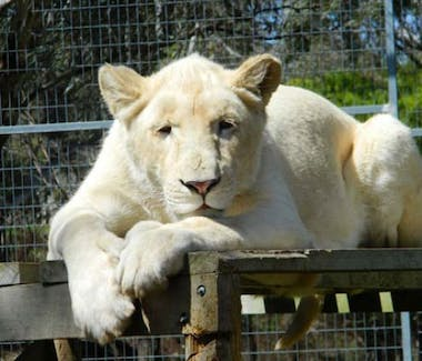 Attraction family - Darling Downs Zoo south of Toowoomba close to Vacy Hall Toowoomba's Grand Boutique Hotel