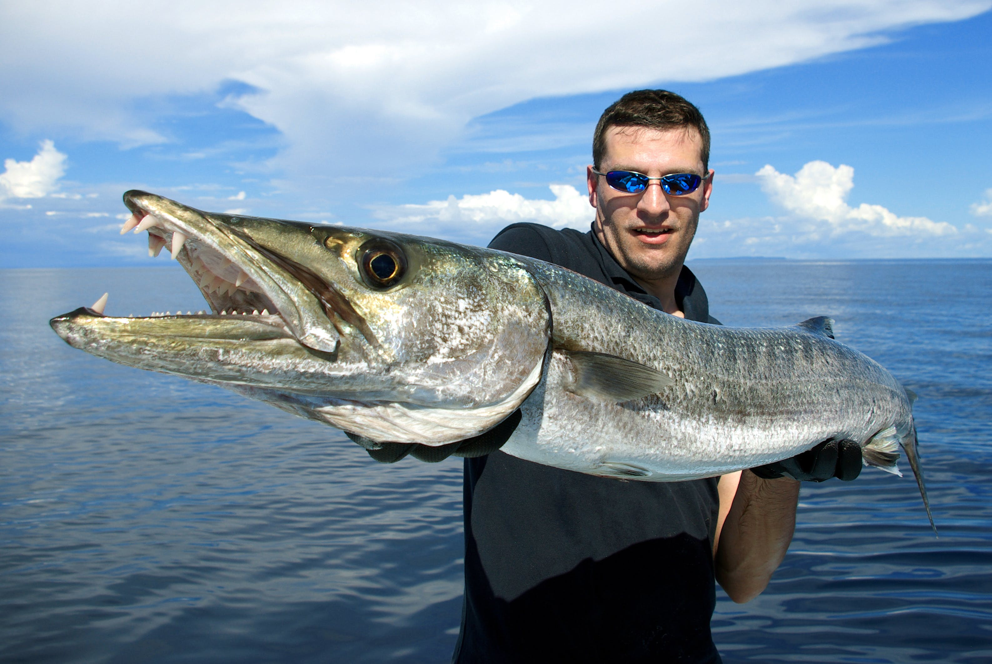 Angler with Barracuda near Harbourside at Marker 33 - Indian Rocks Beach