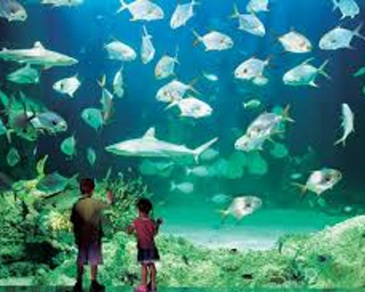 The Sydney Aquarium