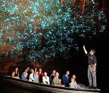 The Glow worm caves is a local experience not to be missed!