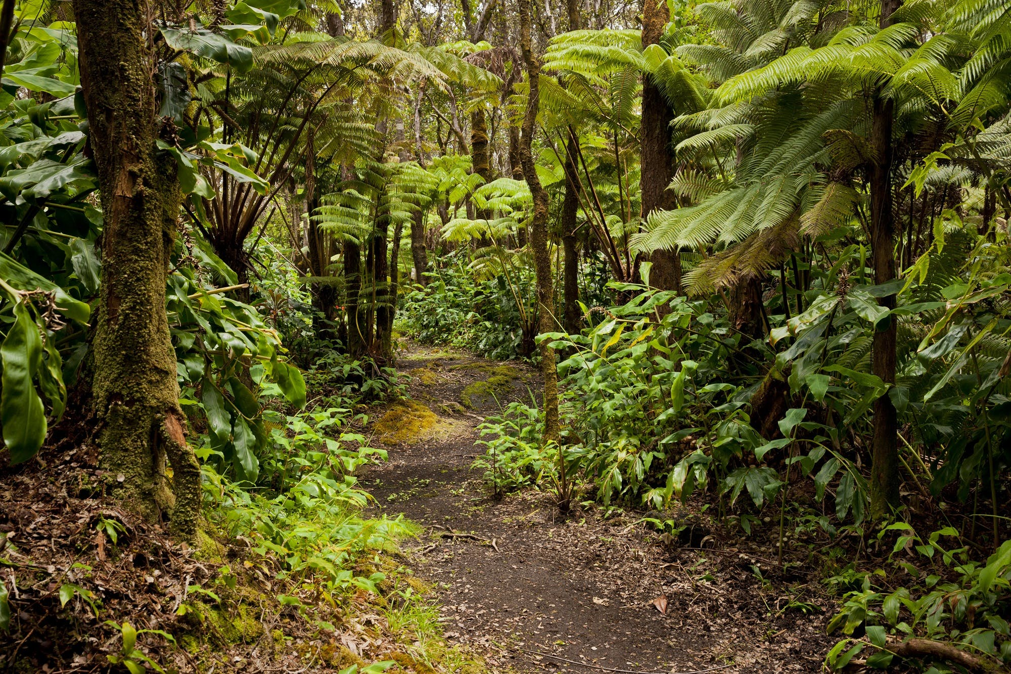Hale 'Ohu rainforest walk