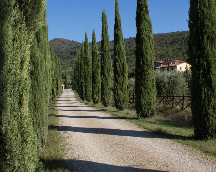 Casa Portagioia Tuscany bed and breakfast ,  Cypress drive