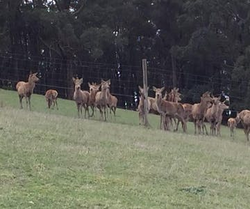 Gracefield's working farm includes 97 acres of deer and other farm animals.
