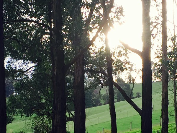Sunsets are stunning at Gracefield cottage among the blackwoods.