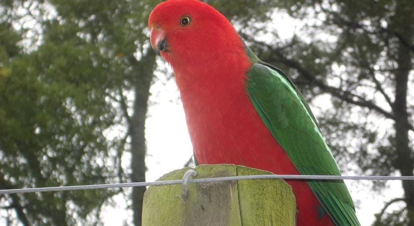 Sit in the comfort of your patio and enjoy the birds and parrots of Gracefield Cottage.