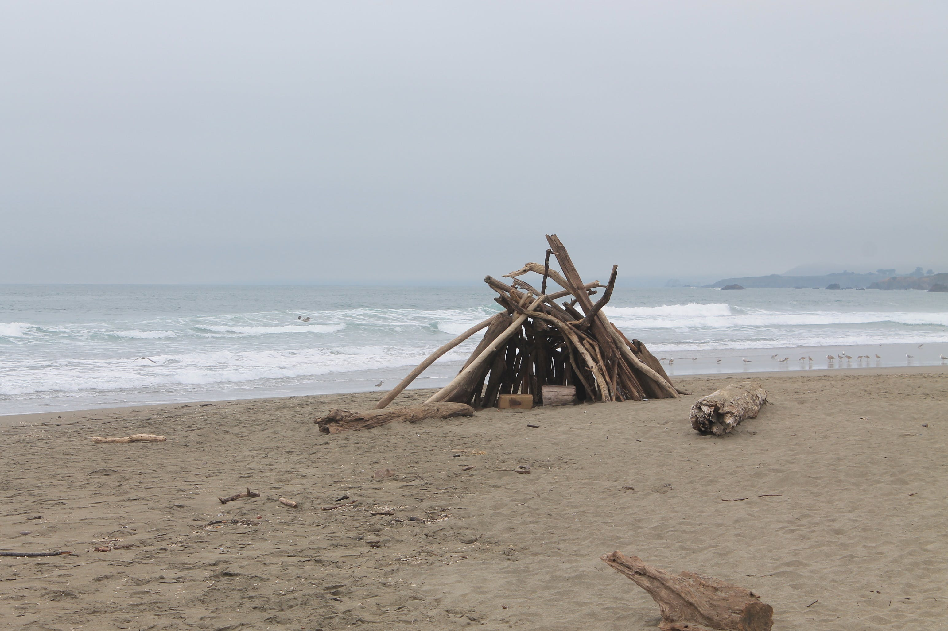 Pacific ocean, highway one, Bodega Bay Inn, beach, coastline, driftwood