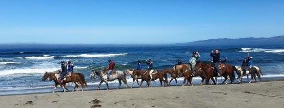 horseback riding on the ocean, pacific ocean, horses, bodega bay inn