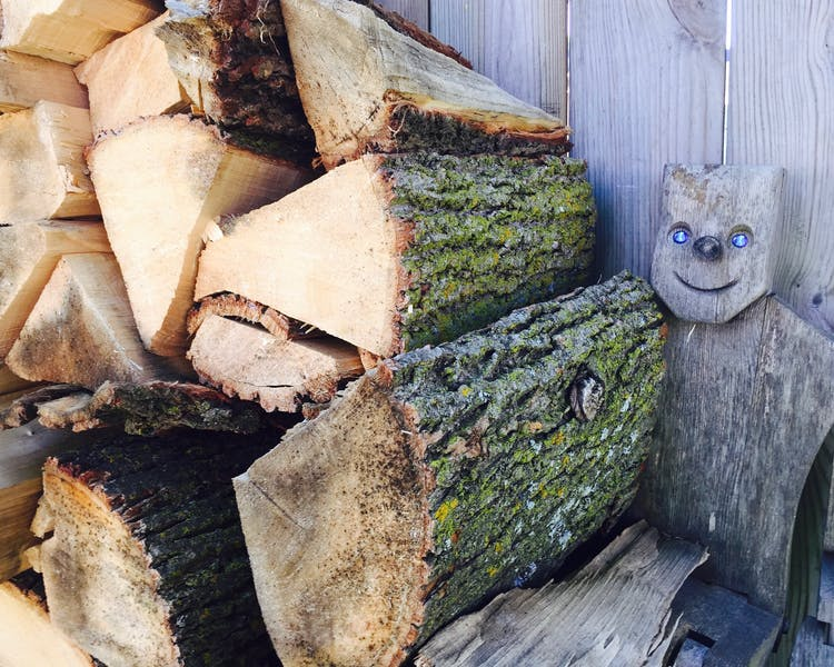 """Old Blue Eyes"" -- our friend in the wood pile."