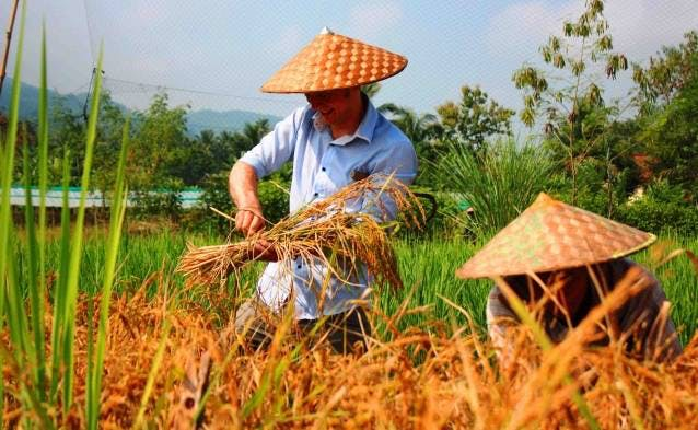 Luang Prabang activities farming rice