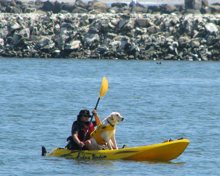 Harbor kayaker with dog