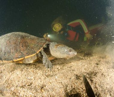 Dive with turtles in Mackay