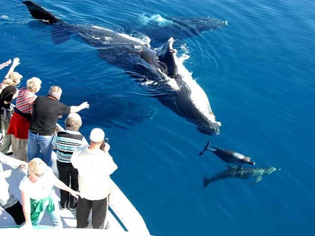 Whale Watching - Blue Dolphin