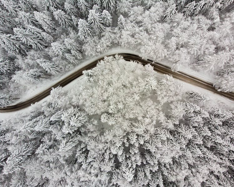 aerial view of snow on trees