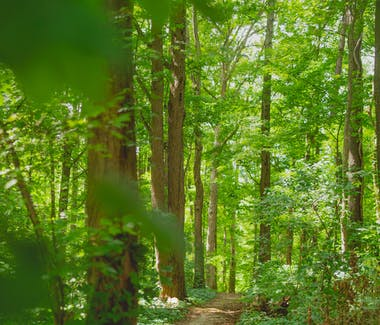 Image of a forest with green leaves and narrow path.