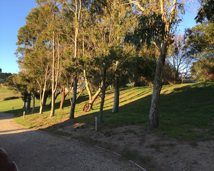 Treeline behind the North & South Cottages