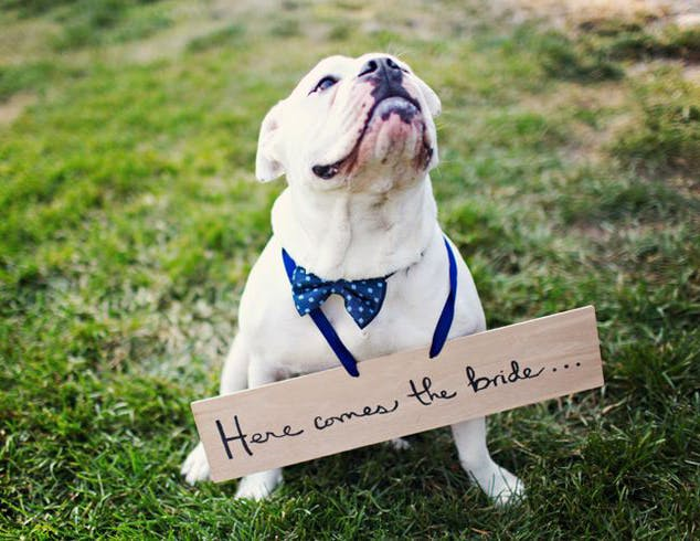 We are a pet-friendly venue for garden weddings