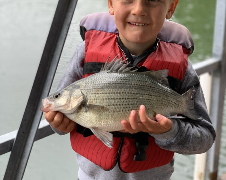 little boy holding white bass table rock lake fishing