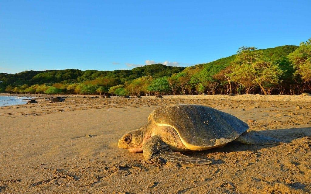 The Best Hidden Beaches In Nicaragua