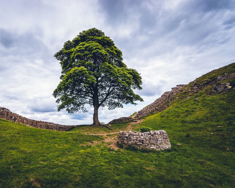 Sycamore Gap - Hadrian's Wall near The Old School House in Haltwhistle, Northumberland