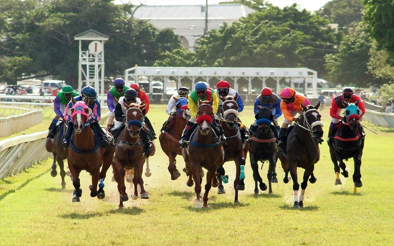 Horse racing at the Garrison Savannah Gold Cup