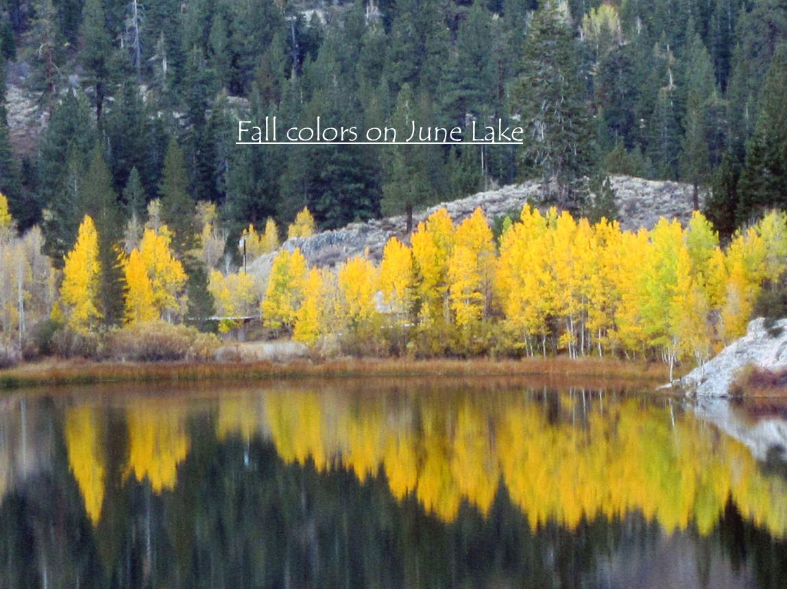 Fall colors on June Lake