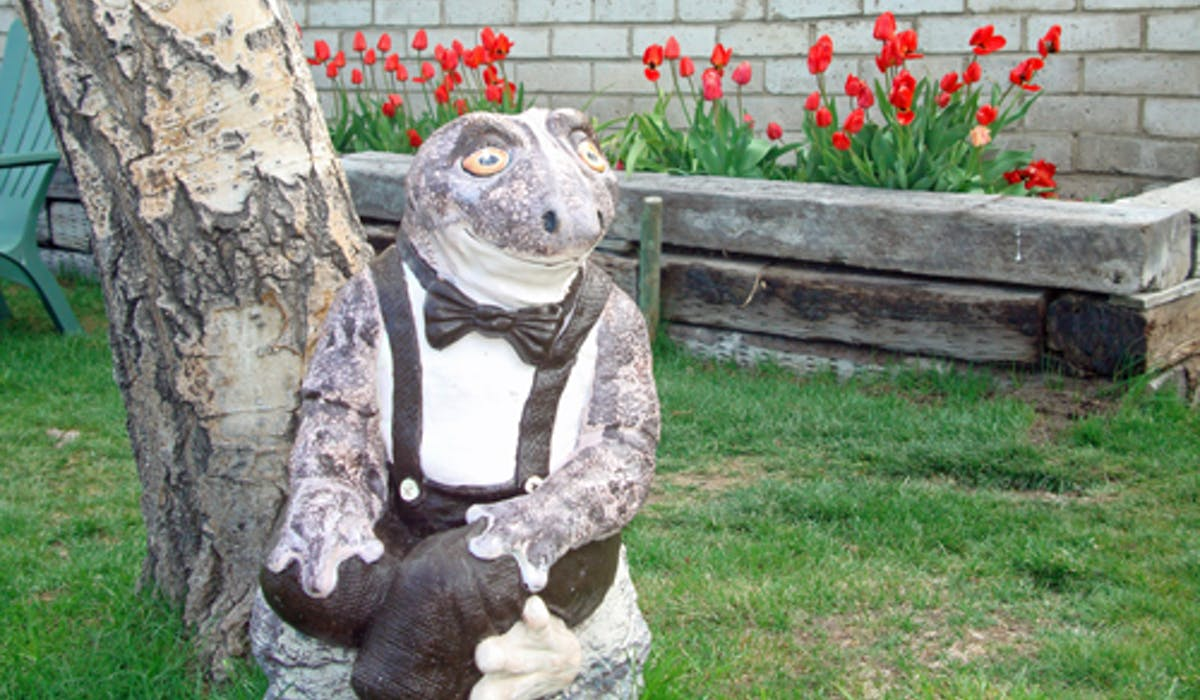 Mr. Sierra Toad and the spring tulips.