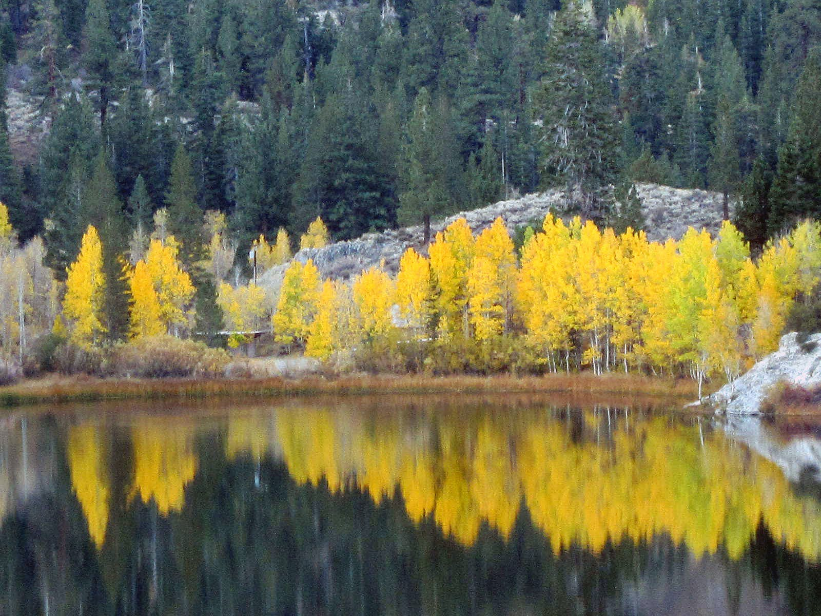 Fall colors in June Lake