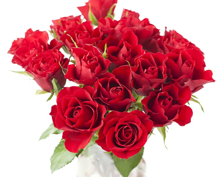 I Love You One Dozen Red Roses 44 Spanish Street Inn