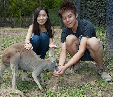 Currumbin Wild Life Sanctuary Kangaroo feeding