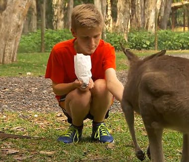 Boy Feeding kangaroo at Currumbin Wild Life Sanctuary