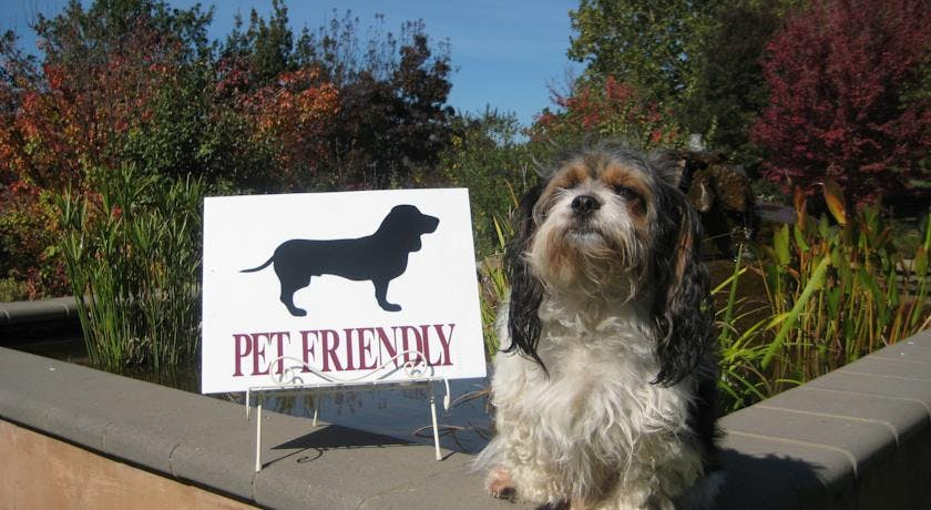 Small Dog pet friendly at The Upper Murray Cottages
