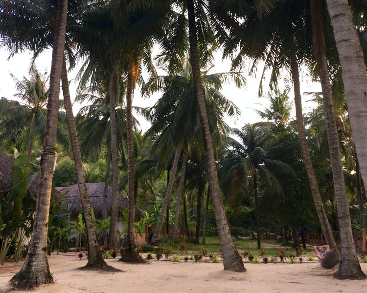 Tropical Garden and coconut trees in Phu Quoc Peppercorn Beach