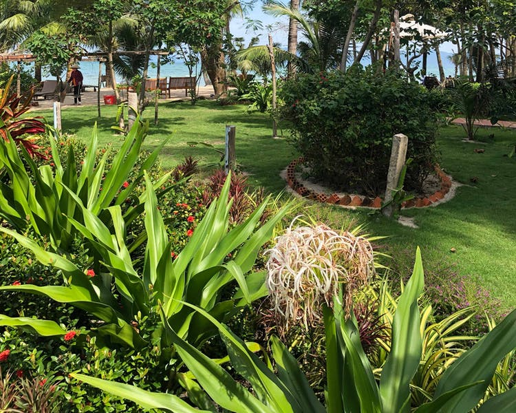 Peppercorn Beach Tropical Garden